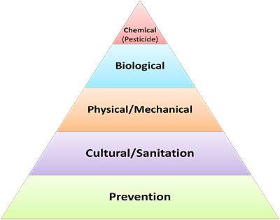 IPMPyramid.jpg
